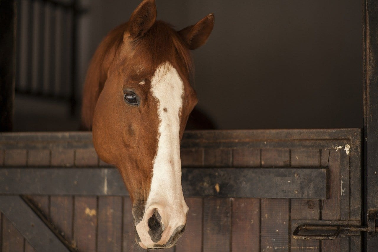 Your Horse Barn