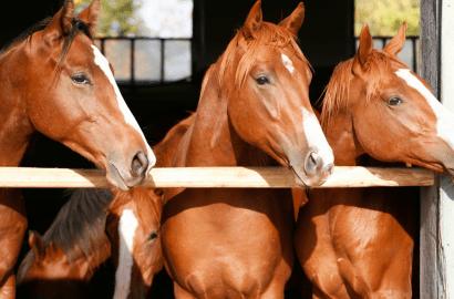 Ohio custom horse ban builders