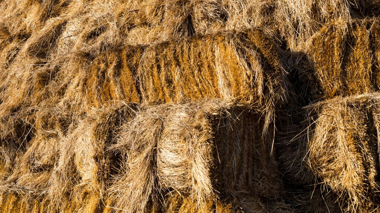 Amish Barn Builders In West Virginia